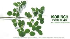 Moringa, la planta que combatiría la obesidad está en Chile